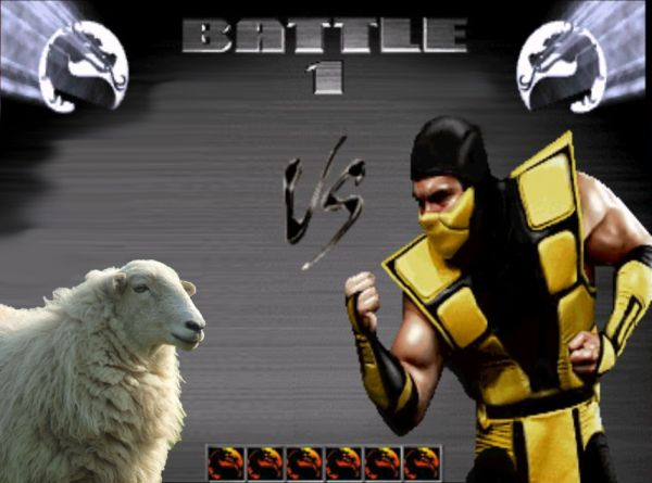 scorpion-vs-sheep