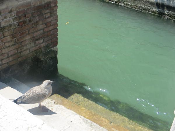 malerisches Venedig 7